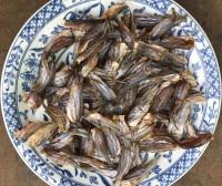 Khô cá chốt châu đốc